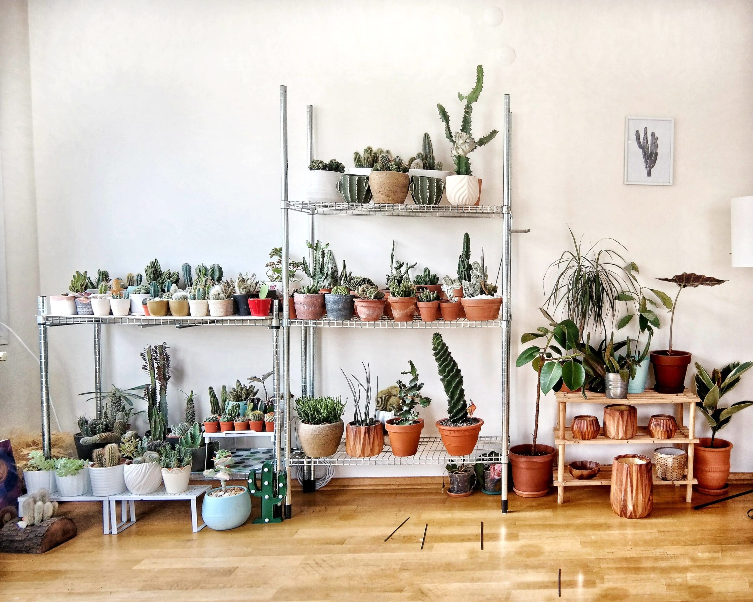 These Three Types of Plants Can Transform Your Living Space